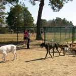 Image for: City of Greenville Off-Leash Dog Park
